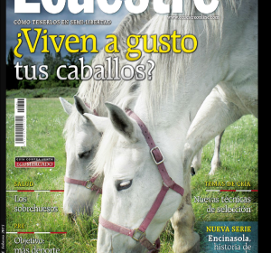 <span>Smart Horse at Ecuestre Magazine</span><i>→</i>